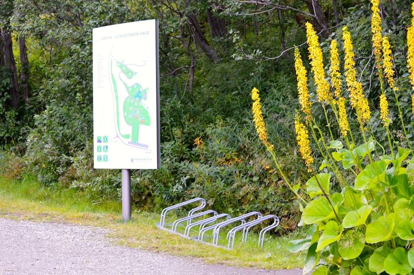 tromso-arktisk-alpine-botaniske-hage-1