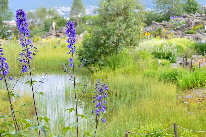 tromso-arktisk-alpine-botaniske-hage-2